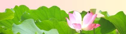 philo-lotus
